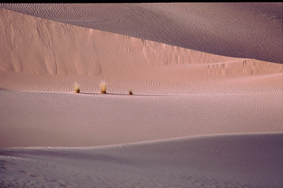 The Algerian Desert
