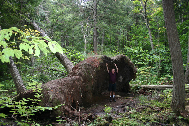 There was a lot of information in the trail guide about flora and fauna and geographical formations and the sort of stuff that bored me to death in school.  However, one thing that I did find of interest was to learn that the forest floor is generally only about one foot in depth of soil and never more than three feet.  This can be seen in the width of the soil roots shown here when this tree toppled.