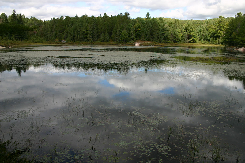This tranquil lake was one of the last vistas of our hike and of our vacation.   All in all, we very much enjoyed ourselves and we expect that we will return next year.   Francine would like to go for two weeks instead of six days.  That is fine with me but I will have to work on getting in better shape for elevation changes when hiking.   I thought that the two hours of walking that I do with Sandy each day had strengthened my legs.   And there is no doubt that it is good for me.   But there is no substitute for actually climbing the hills in Algonquin Park.