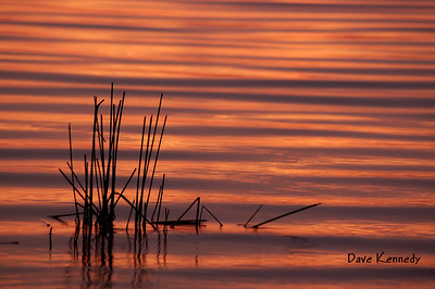 Algonquin;Sunrise-Sunset;Reeds;Flatwater