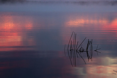 Algonquin;Algonquin;Sunrise-Sunset;Reeds