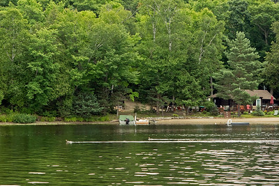 Loons on Oxtongue River