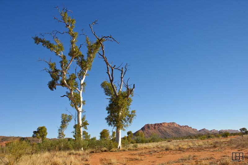 Trees painted by Albert Namatjira