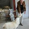Leni feeds a lamb