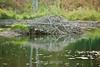 Beaver Den - Allegany State Park (3)