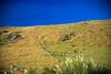 REW NZ Day1 Alpine to Franz Joseph 0031