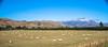 REW NZ Day1 Alpine to Franz Joseph 0059