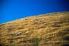 REW NZ Day1 Alpine to Franz Joseph 0030