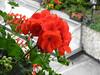 Flowerbox @ the Hotel Evaldo in Arabba
