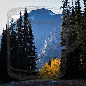 Mount Superior and glowing aspen.