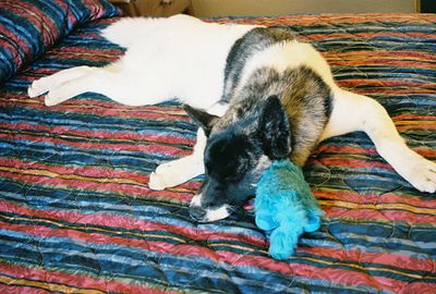 "7/4/05 Hana with ""Blue Kitty"", Best Western Trailside Inn, Alturas, Modoc County, CA"