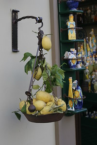 Amalfi Lemons used in making Limoncello