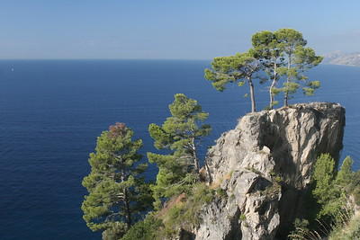 Trees Growing in the Rocks along the Mediterranean
