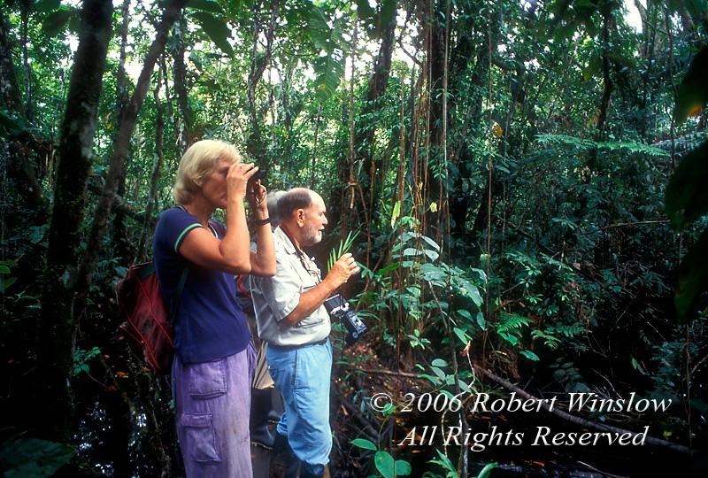 Model Released, Three People Exploring Amazon Basin Rain Forest, Sacha Lodge, Ecuador