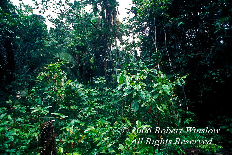 Vegetation, Amazon Basin Rain Forest, Ecuador