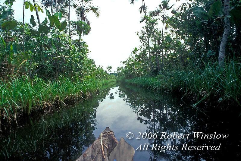 Dugout Canoe Ride, Vegetation, Amazon Basin Rain Forest, Sacha Lodge, Ecuador