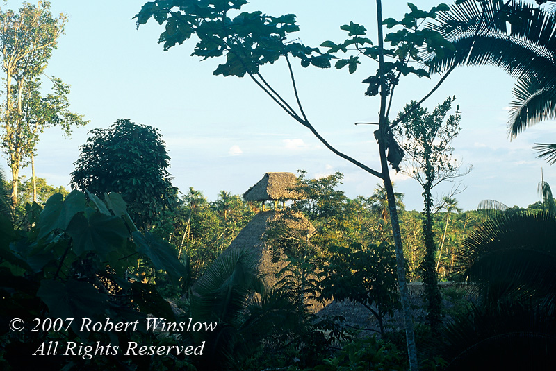 Observation Tower, Sacha Lodge, Amazon Basin Rain Forest, Ecuador