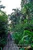 Model Released, Exploring Amazon Basin Rain Forest, Sacha Lodge, Ecuador