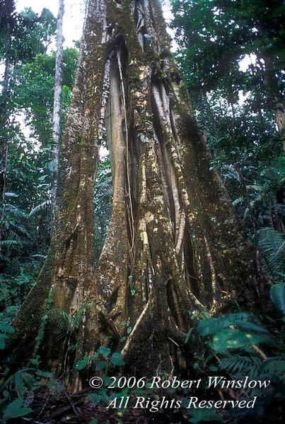 Vegetation, Amazon Basin Rain Forest, Ecuador