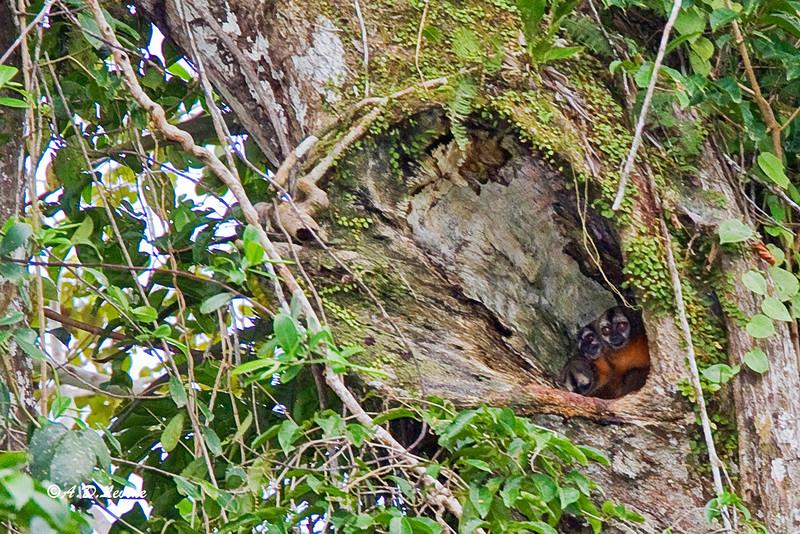_MG_0593 owl monkeys