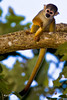 _MG_0693 squirrel monkey