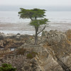 Lone Pine on 17 Mile Drive
