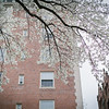Nyuko-Days-in-Boston-18