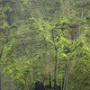 Threading the flanks of Mt Wai'ale'ale by helicopter<br /> <br />  Kauai