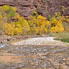 Cottonwoods along the Virgin River<br /> <br /> Zion National Park