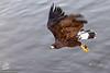 Aerial hunting