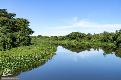 A river of piranhas