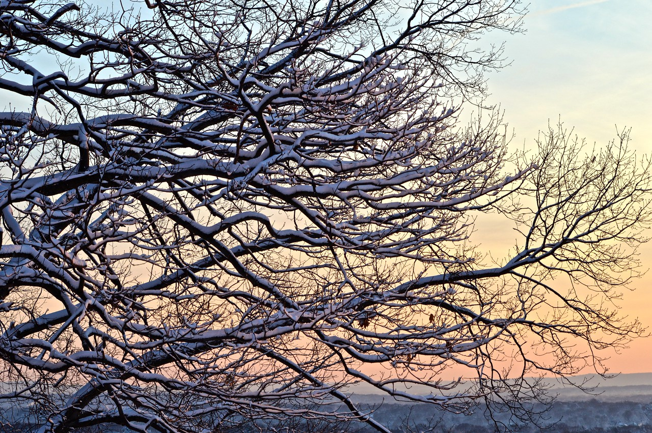 Snowtree Sunset