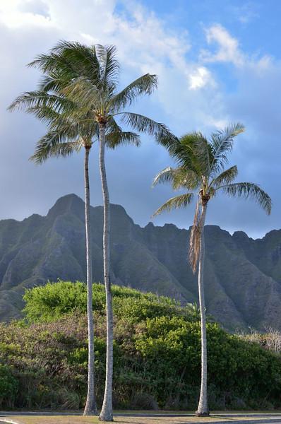 Kualoa Regional Park,<br /> Kamehameha Highway<br />  Oahu