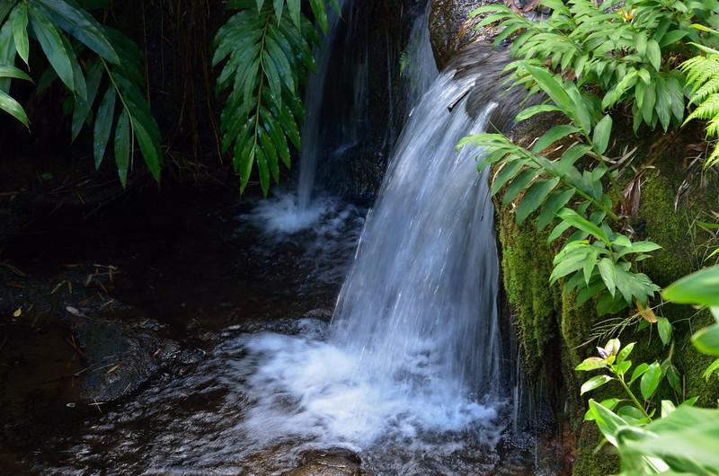 Water is everywhere in Akaka State Park.<br /> Hawaii