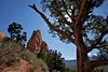 A juniper tree (Juniperus communis)  frames a view out into Colorado Springs in the Garden of the Gods park.