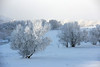 White Christmas in Utah.