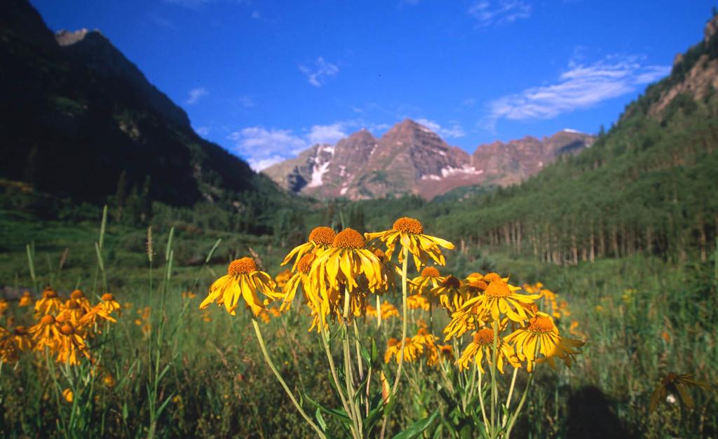 Maroon Bells sunflowers, summer Aspen, Colorado