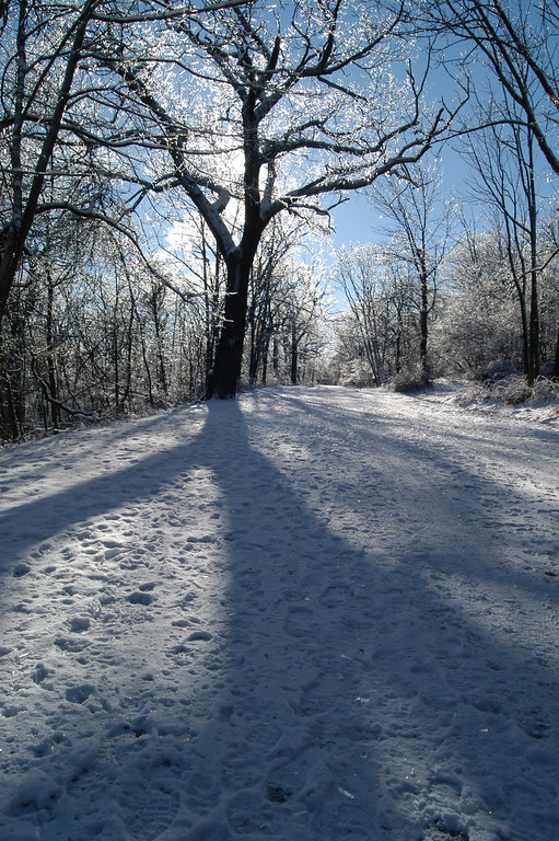 Winter tree shadow in South Orange, New Jersey