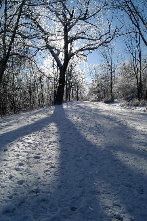 Winter tree shadow in South Orange, New Jersey