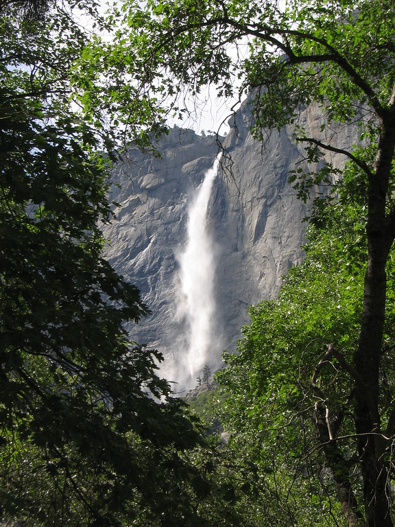 Upper Yosemite Falls tree frame, California