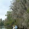 Okeefenokee Swamps, Georgia