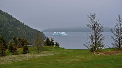 Look who decided to stop by for a visit.  Sandy Cove, June 11th, 2014.