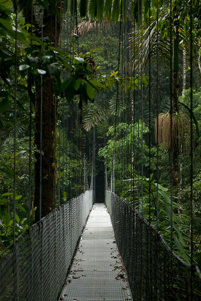 "Hanging bridge, <a href=""http://www.hangingbridges.com/"">Arenal Hanging Bridges</a>."
