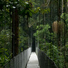 "Hanging bridge, <a href=""http://www.hangingbridges.com/"">Arenal Hanging Bridges</a>."
