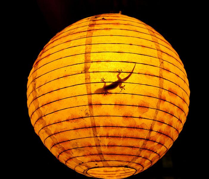 Gekko in lantern.