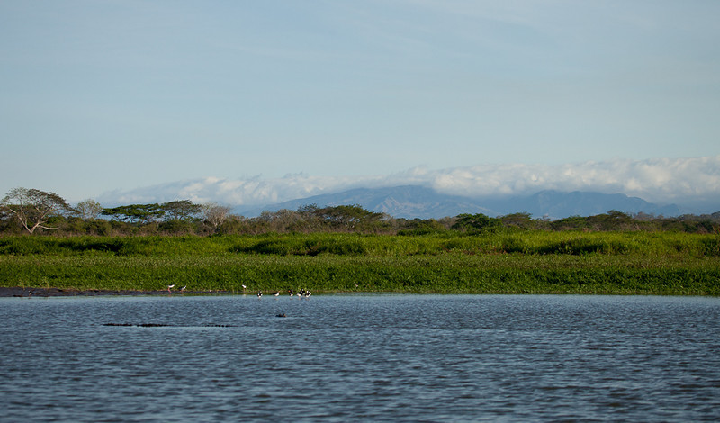 Crocodile, birds, and clouds over the Cordillera range.