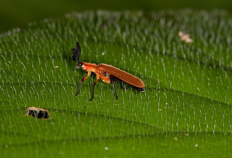"""Bug, <a href=""""http://butterflyconservatory.org/"""">El Castillo Butterfly Conservatory</a>."""