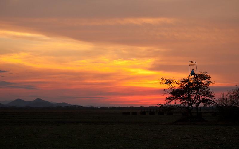 Sunset at Palo Verde National Park.