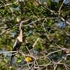 Snakebird (aninga aninga).