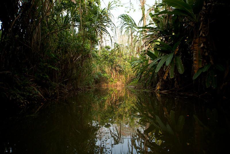 "Boat tour on the Rio Estrella, starting at the <a href=""http://www.slothrescue.org/"">Sloth Rescue center</a>."